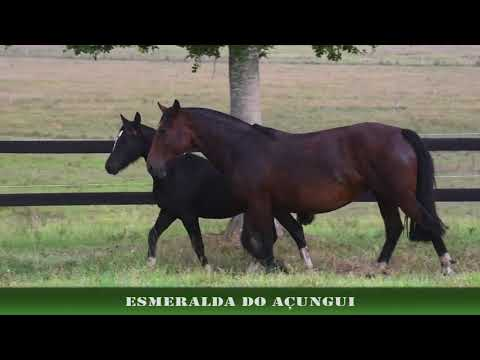ESMERALDA DO AÇUNGUI