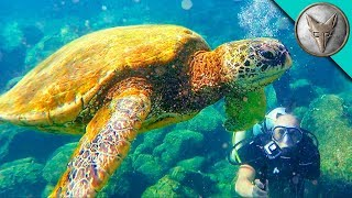 Diving with Sea Turtles!