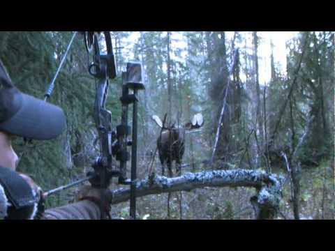 Lov losa lukom i strijelom