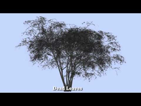 Japanese Maples Promotional Video