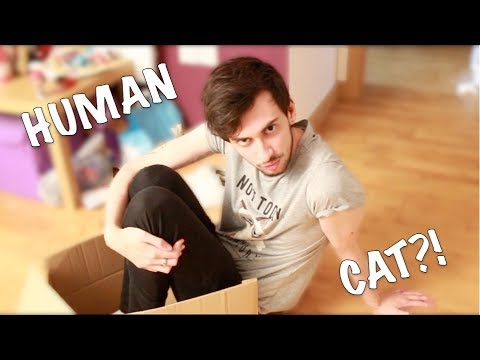 IF CATS WERE HUMAN || ft. Apollo The Cat