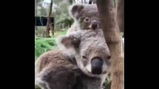 Compilation : Cute baby animals