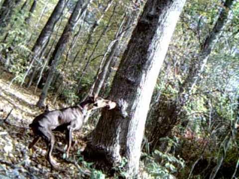 Peanut Butter Deer Feeder First Attempt Youtube