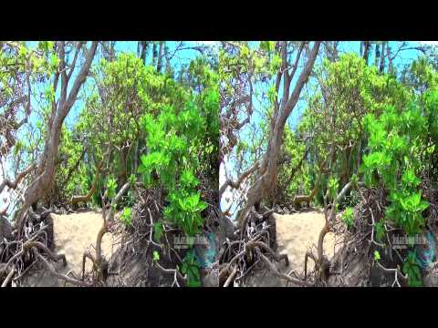 3D Video extreme!!! (evo 3D Works) Hawaii's Nature In 3D 2 (Yt3d) 3D Nature
