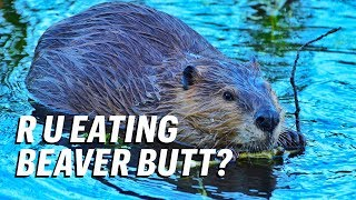 Foods You Eat That Contain Beaver Butt Juice || GutBusted