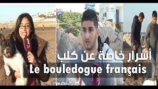 Le bouledogue français أنا و صاحبي الحيوان:أسرار خاصة عن كلب       أنا و صاحبي الحيوان