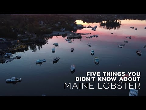 Maine Lobster is an iconic American industry, but there might be some things you didn't know about the historic fishery. From its contributions to the Maine economy, to its impact on the waterfront communities throughout the state, and the seasonal differences between New Shell and Hard Shell – the is much to be learned about this dynamic crustacean. (Credit: Maine Lobster Marketing Collaborative)