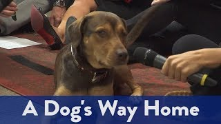 """""""A Dog's Way Home"""" in Studio"""