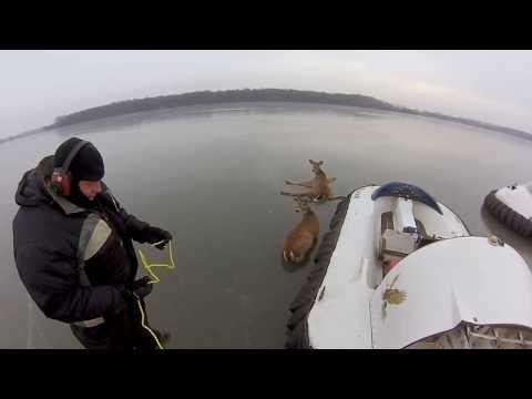 Spašavanje jelena na zaleđenom jezeru
