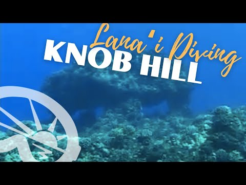 """Knob Hill"" dive site on Lanai with Extended Horizons Scuba, Maui, Hawaii"