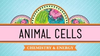 Eukaryopolis - The City of Animal Cells: Crash Course Biology #4 - YouTube