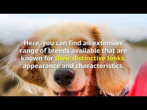 Pups Brisbane For Sale