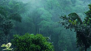 Relaxing Music & Soft Rain: Sleep Music, Calm Piano Music, Healing Music, Peaceful Music ★149
