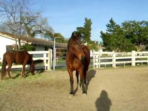 Sadie's Haven Sanctuary Horses