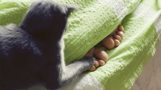 Funny cats waking up owners – Funny cat compilation