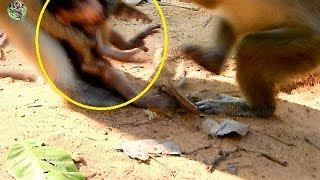 Why DeeDee catching poor new baby Timo from Mom Tima? | Pity new baby Timo cry loudly request |