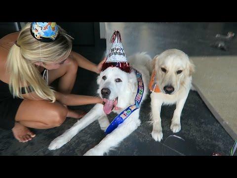 KODA'S THIRD BIRTHDAY! (Super Cooper Sunday #65)