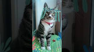 Cats are so funny you will die laughing 698