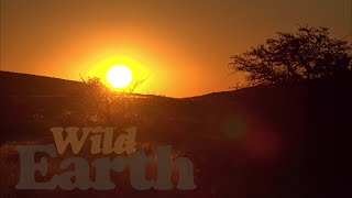 WildEarth - Sunset - 12 May 2021