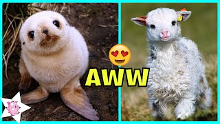 The Cutest Baby Animals Ever