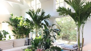 HOUSEPLANT TOUR + indoor plant tips and care