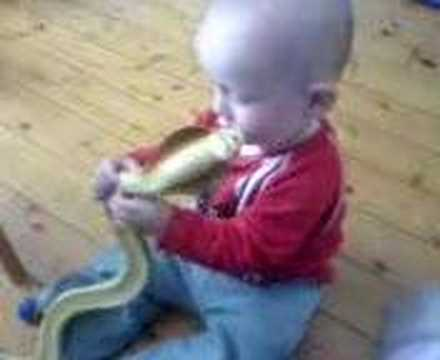 King Cobra Bites Baby Baby with cobra - YouT...
