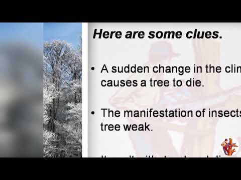 All You Want to Know About Dead Trees in Adelaide.