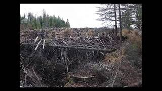 Beaver Dam Collapse Update 2018