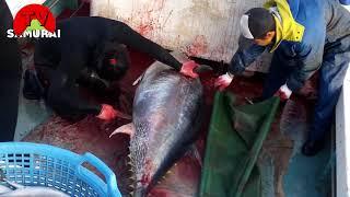 Cách người Nhật câu cá ngừ triệu đô