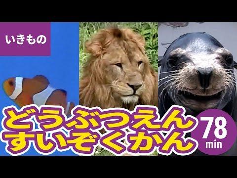 動物・いきものまとめ[3]動物園・水族館の人気者と珍しい生き物〈79min〉