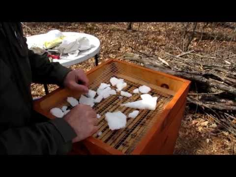 Backyard Beekeeping Part 24(S4:E1): Nosema, Spring Inspection