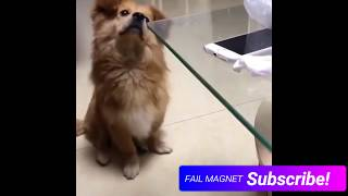 Top Best EPIC FAILS | Funny Videos February 2019 *PETS EDITION*