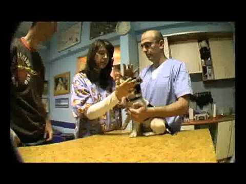 Prva poseta veterinaru - razlozi