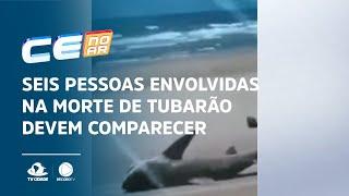 Seis pessoas envolvidas na morte de tubarão devem comparecer à delegacia