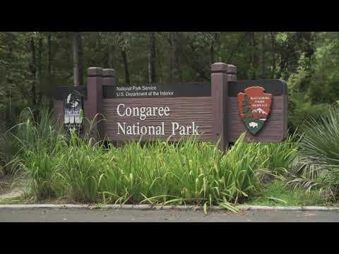screenshot of youtube video titled Congaree National Park   Carolina Snaps