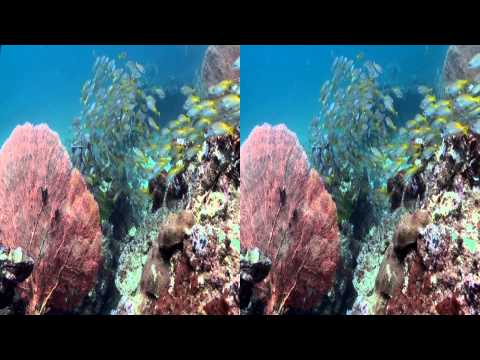 Underwater Thailand: Adventures in the Andaman Sea (3D Diving Footage) Trailer