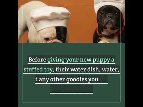Preparing Your Home for Your New Puppy
