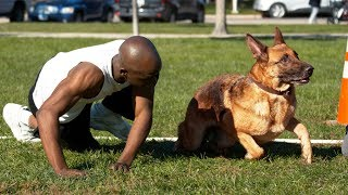Dog vs Human Sprinting - Who's Faster?