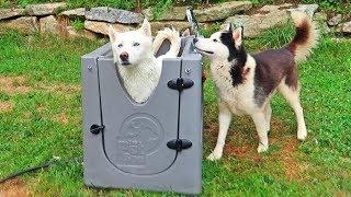 Home Pet Spa Test