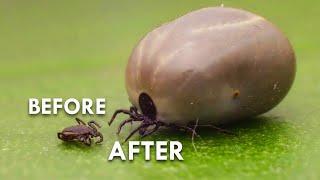 Ticks: The Actual Worst