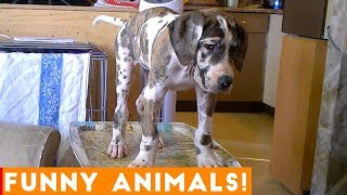 Funniest Pets & Animals of the Week Compilation October 2018 | Funny Pet Videos - YouTube