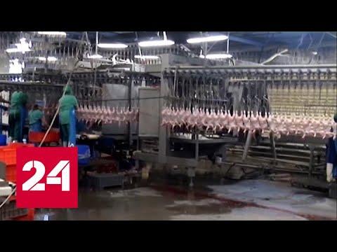 Осужденные работают на красноярской птицефабрике