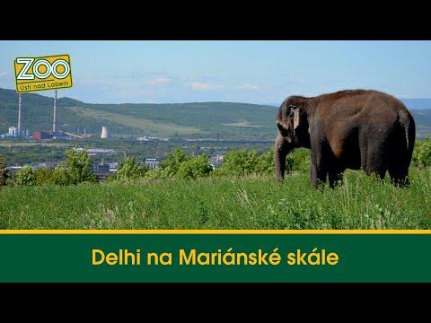 Procházka slonice Delhi