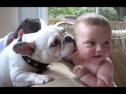 Best Babies and Animals Compilation (2014)