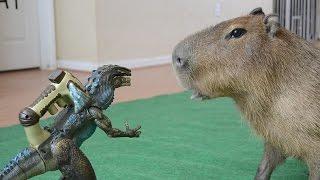 World's Largest Rodent Vs Godzilla
