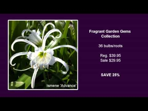 Fragrant Garden Gems Collection