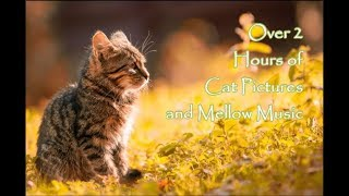 Enjoy over 2 hours of beautiful cats! Cats, kitties, playing and having fun