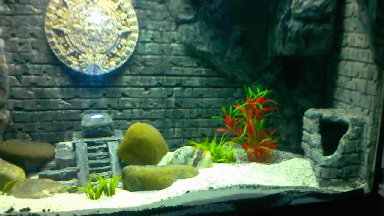 bild aquarium anzeigen wallpapers-#17