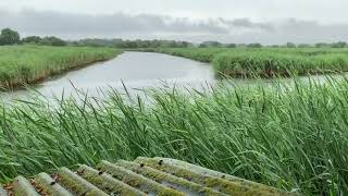 Light Rain on a Tin Roof w/ Wind Blowing Through the Reeds in the English Wetlands | Relax & Sleep