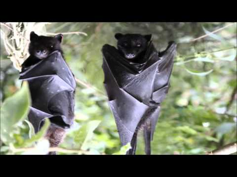 Flying fox's message from the project - Oceans 2 Earth